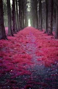 seven woods