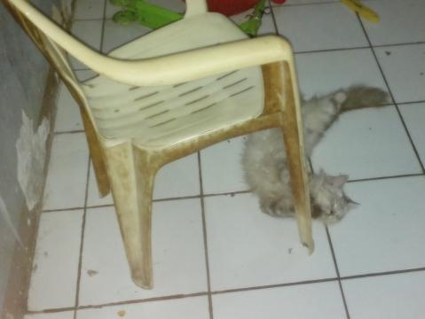 Helen tidur sambil meluk kaki bangku (atau tidur sambil dorong bangku? ngelindu? Entahlah.)