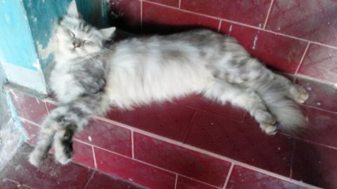 Helen tidur siang di tangga